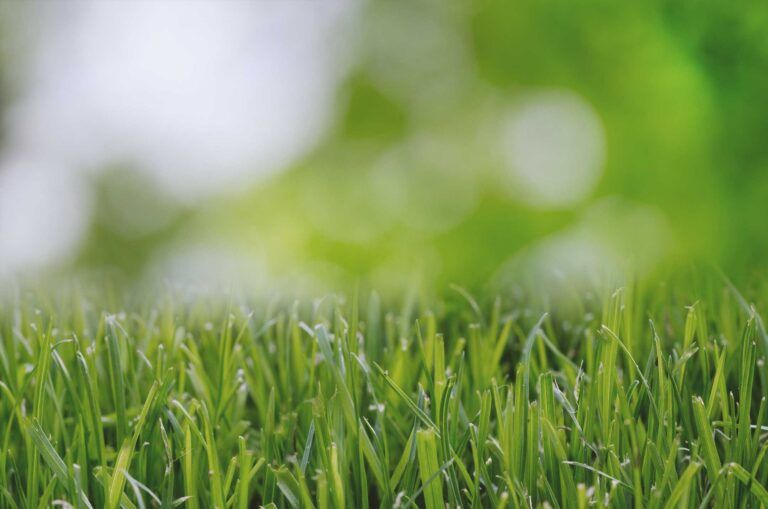 Grass Close Up to demonstrate Lawn Fertilization