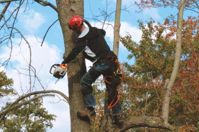 Tree trimmer at work, part of the Tree Trimming, Removal & Stump Grinding services